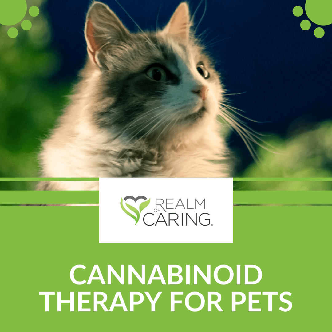 Cannabinoid therapy fo rpets